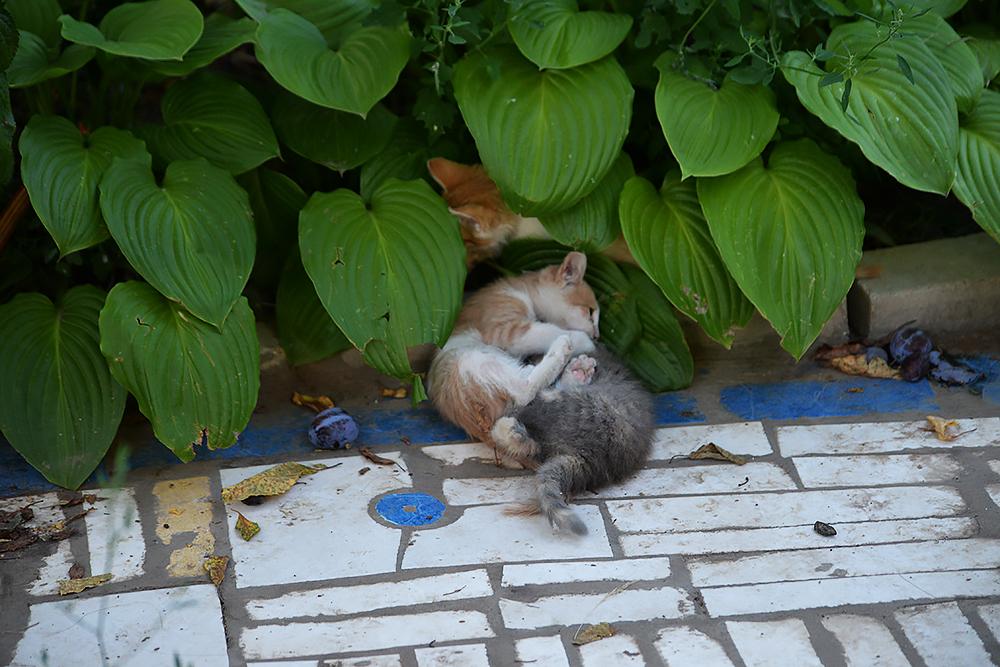 cats23.jpg