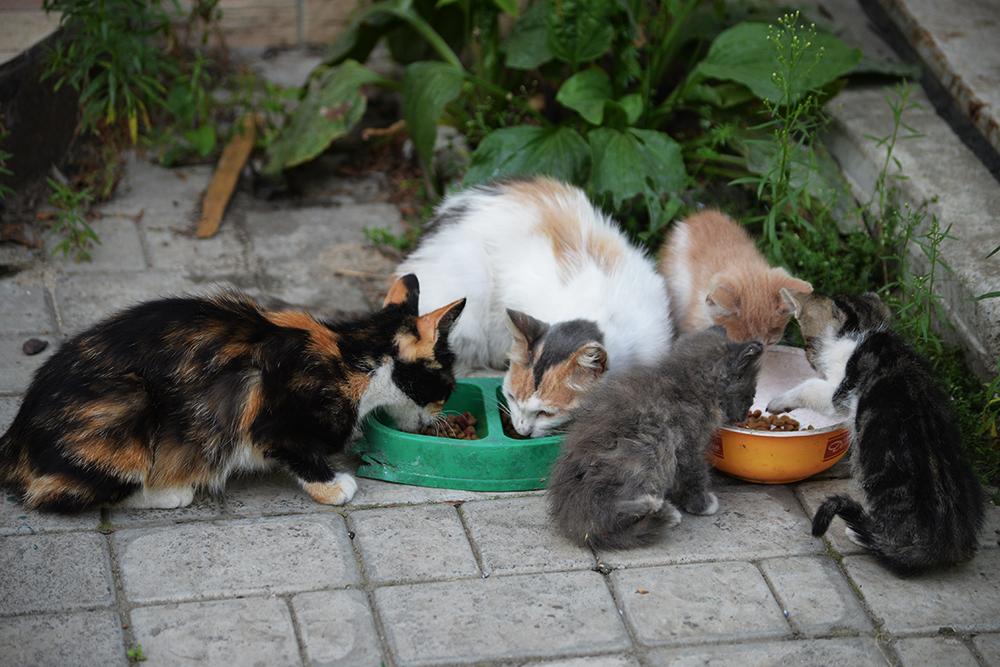 cats25.jpg