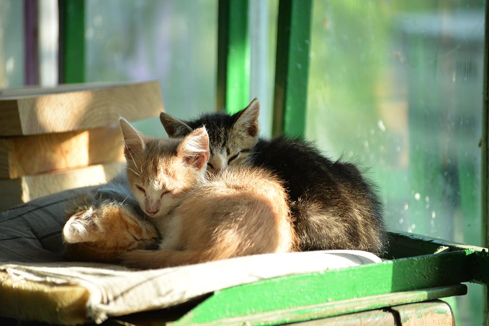 cats27.jpg