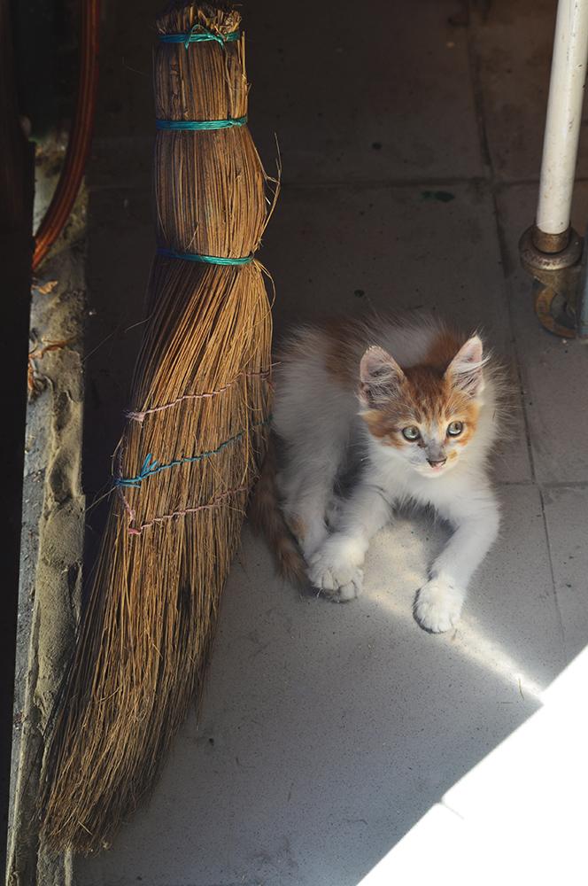 cats28.jpg