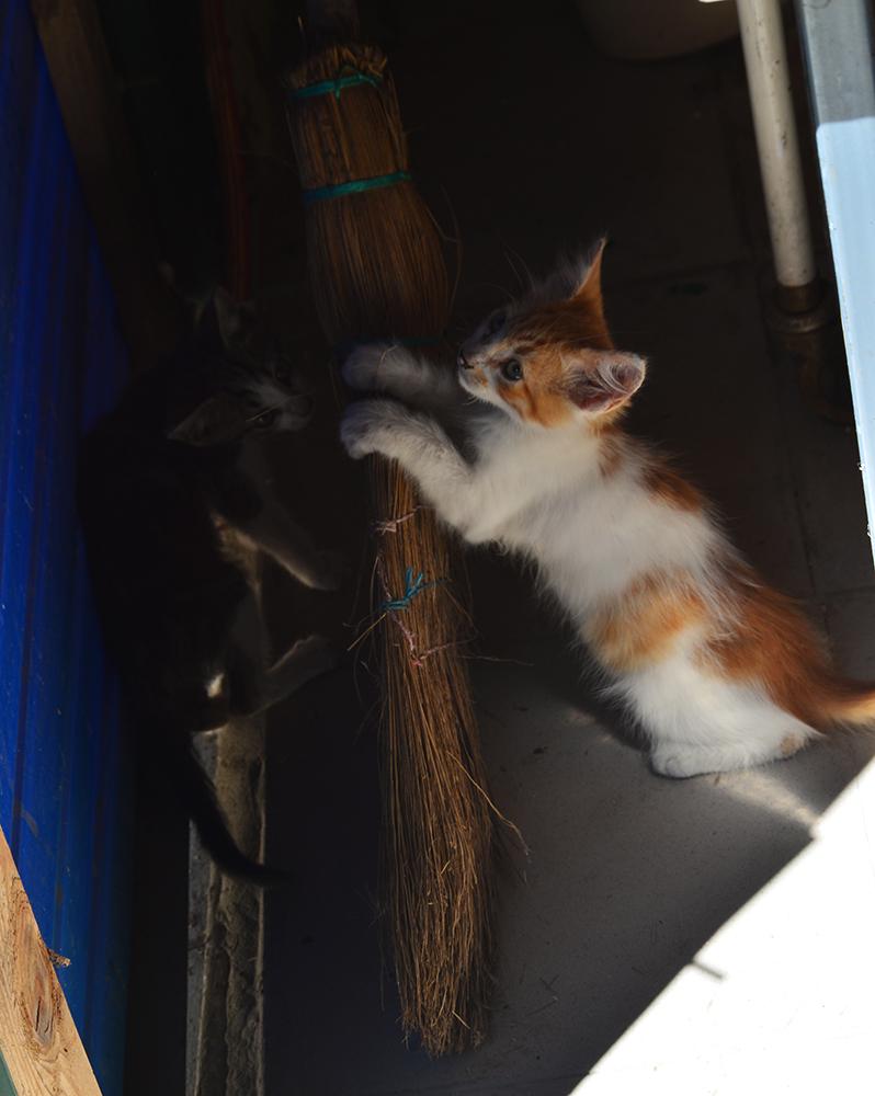 cats29.jpg