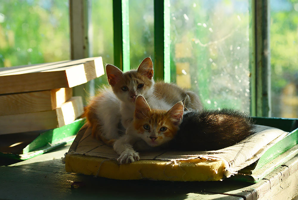 cats33.jpg