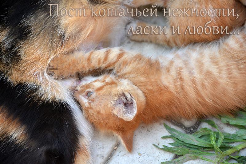 cats_oblojka.jpg