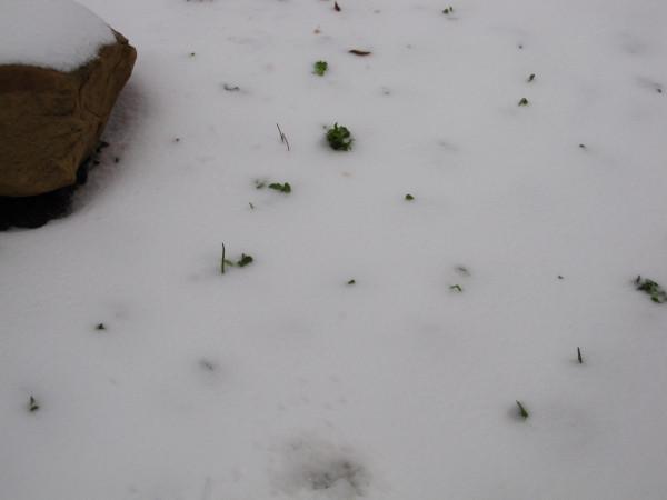 snow 11-14-13 004