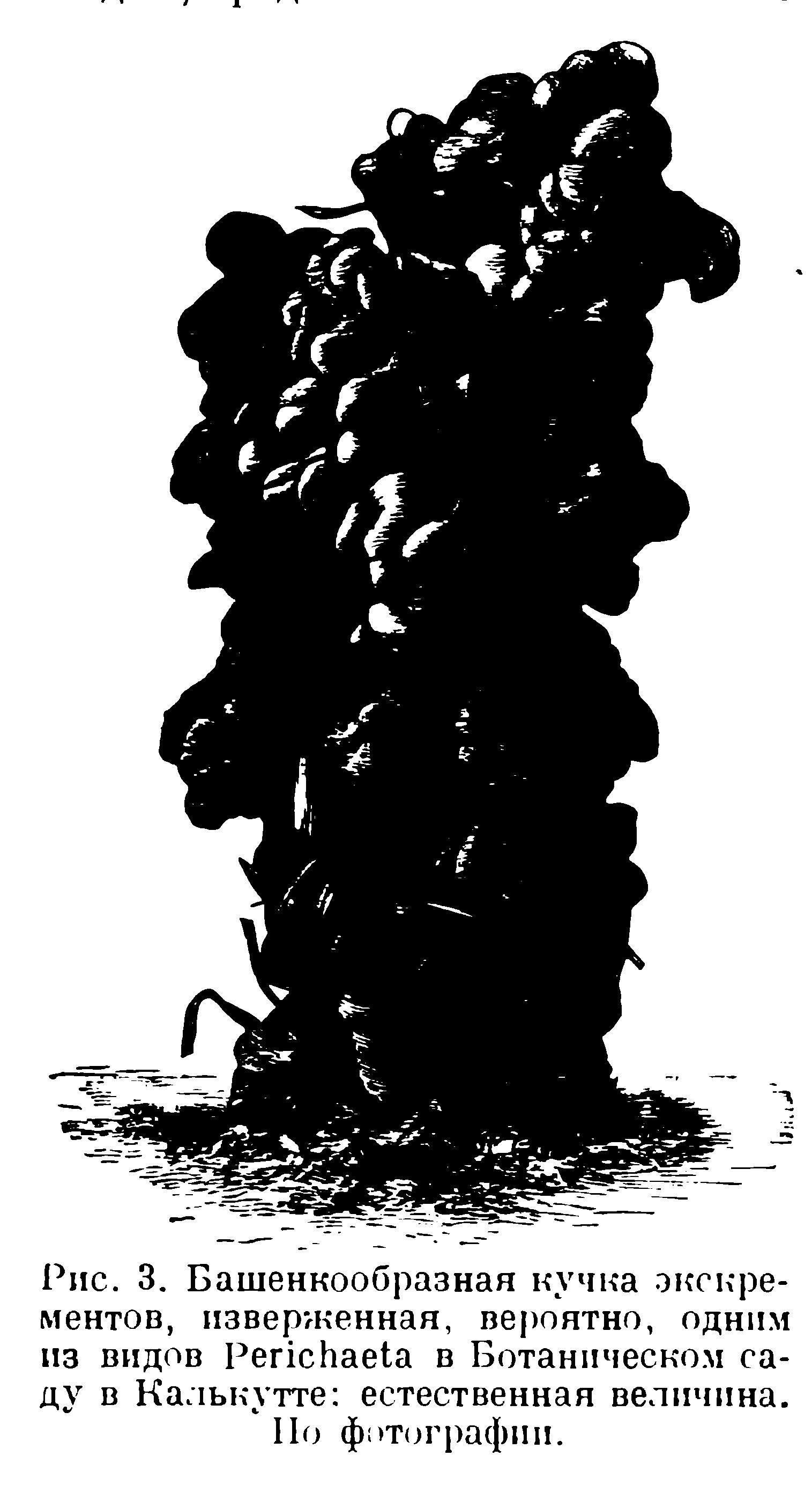 Дарвин Ч. Том 2. Зоологические работы. Дождевые черви. Геологические работы. (1936) Червь наклал