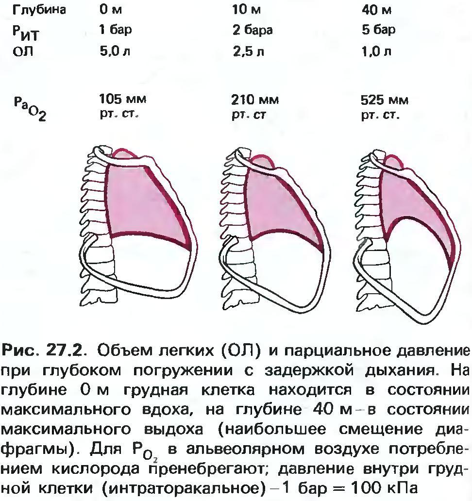 Sshmidt_2005_3 Нырять или жить