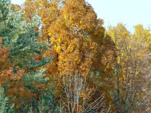 Autumn leaves NY
