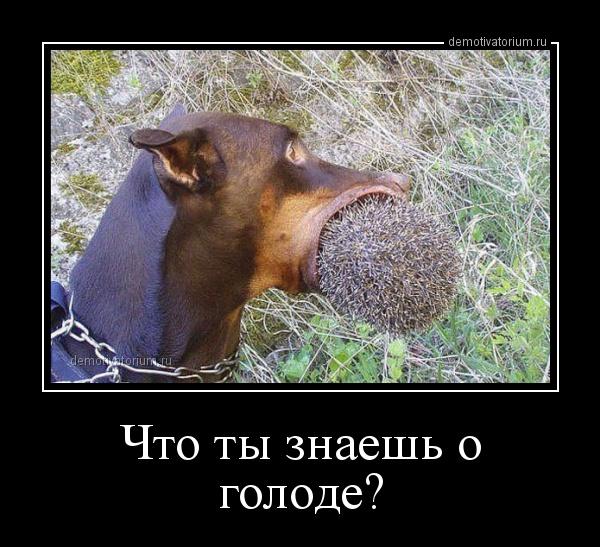 demotivatorium_ru_chto_ti_znaesh_o_golode_71451