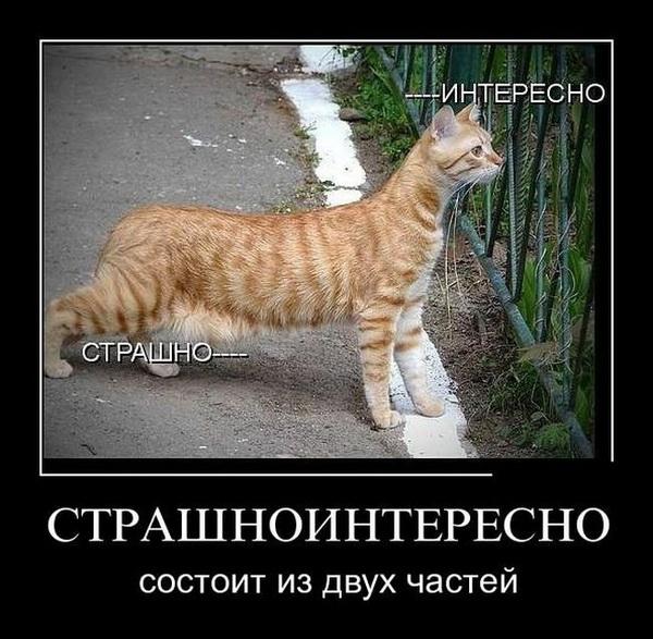 1439533341_7-smeshnye-demotivatory_xaxa-net.ru