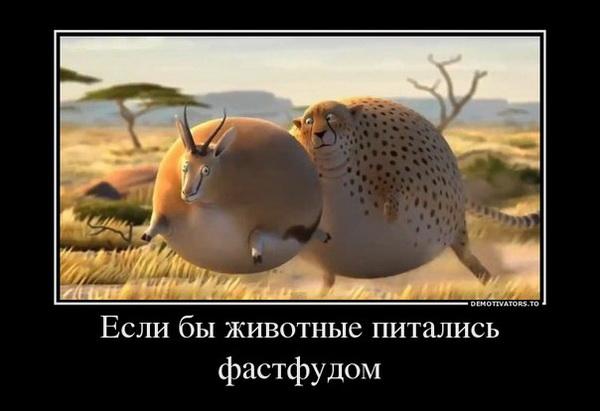 0_a59c3_35a72699_orig