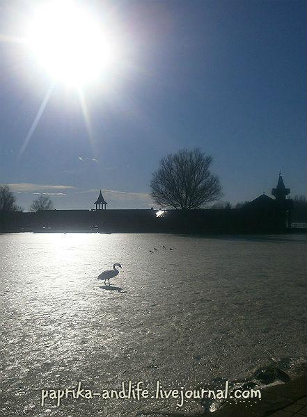Озеро Балатон, январь 2016