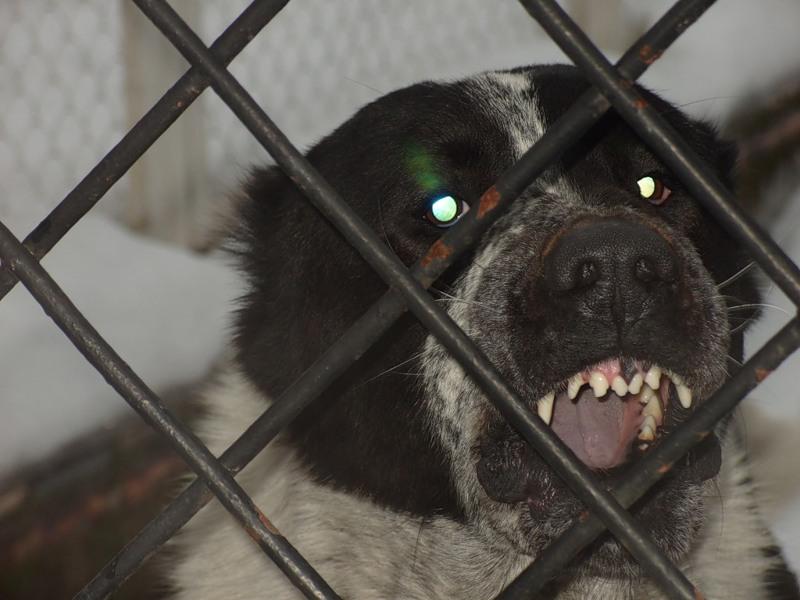 знания, Какой штраф в новукузнецке хозяину собаки за укус ребенка более