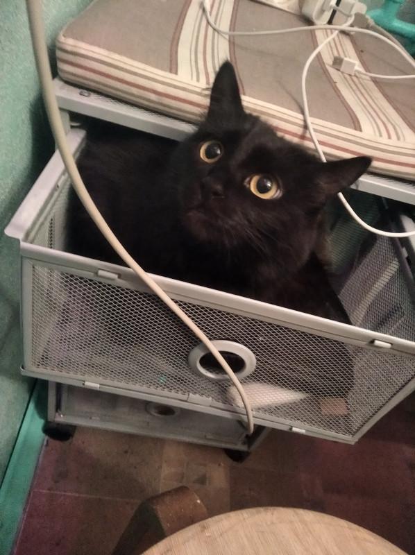 Не люблю кошек.