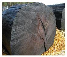 Мореный дуб (bog oak)