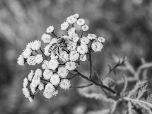 Осенняя муха