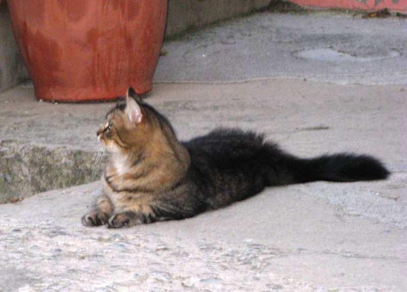 коты в Италии