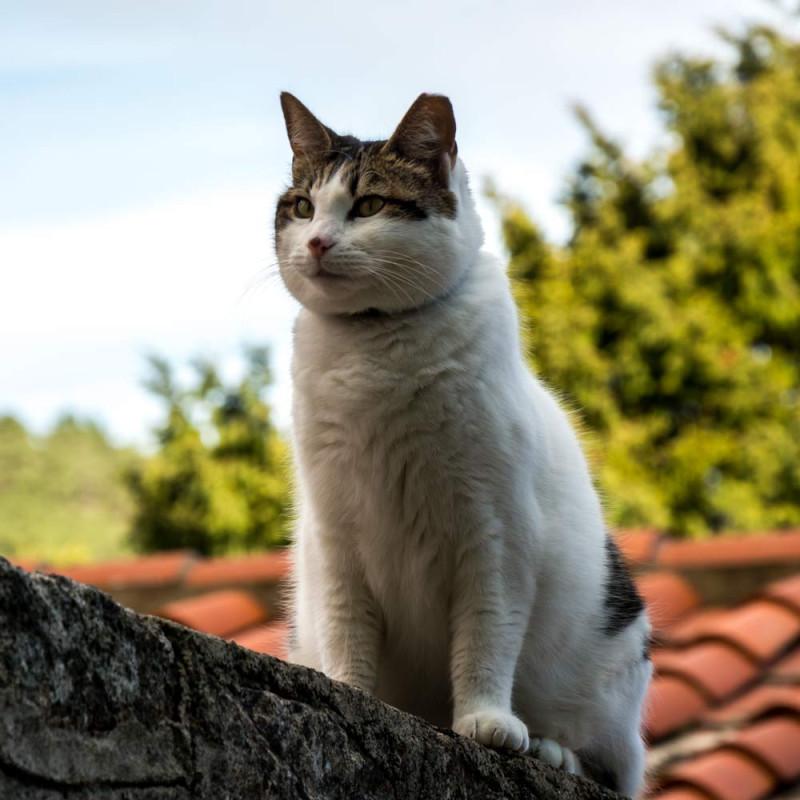 Gatti di Elba-2