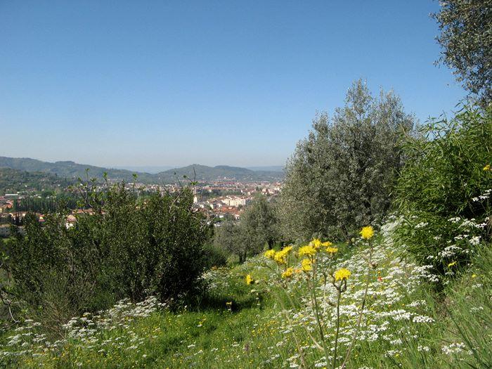 вид на Ареццо с холма