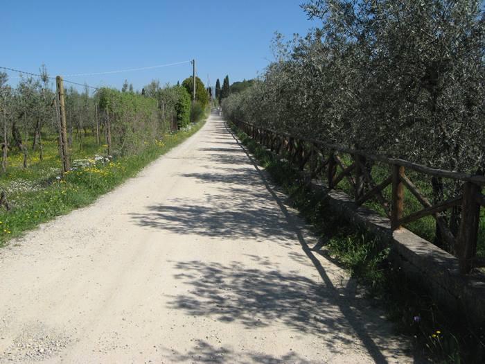 белые дороги в районе Ареццо