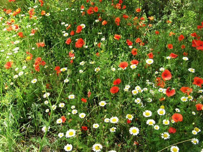 цветы в Тоскане