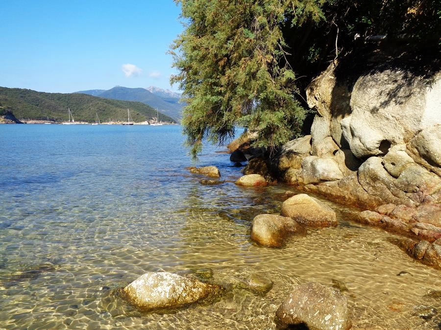 растительность у моря