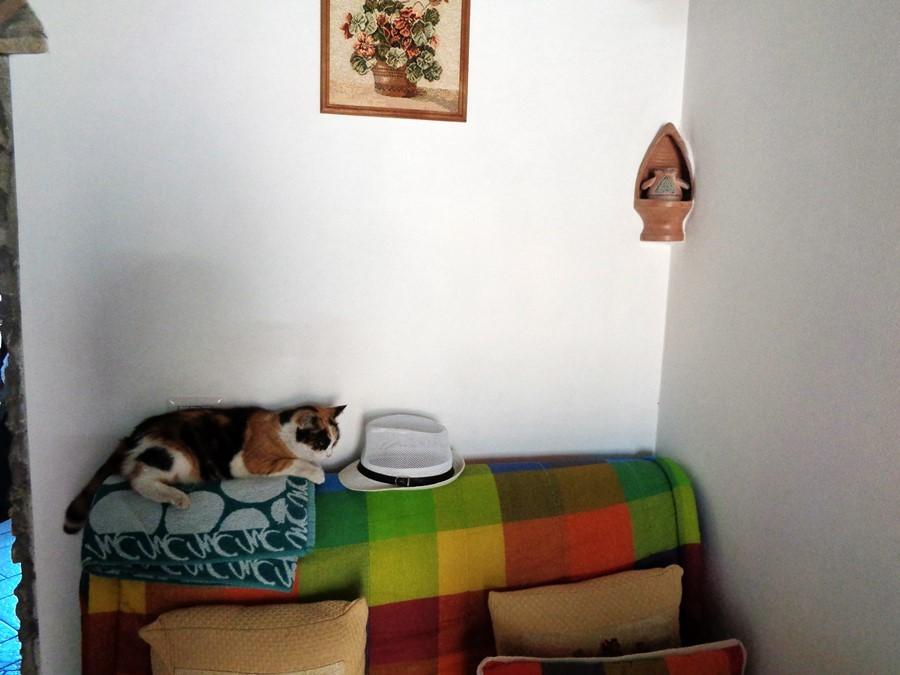 кошка сафина в квартире