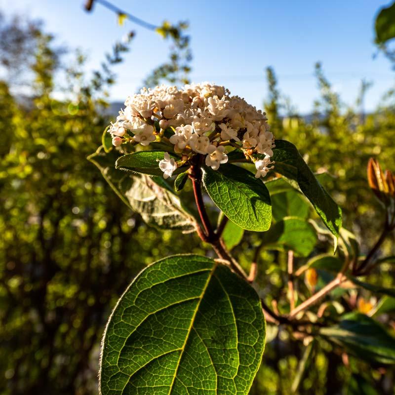 цветение на Эльбе