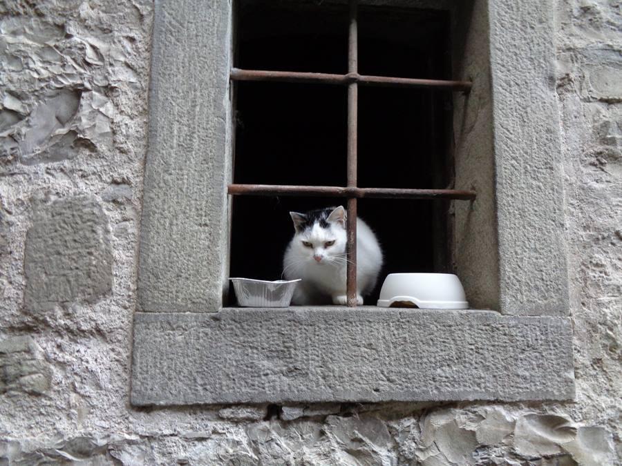 кот в капрезе микеланджело