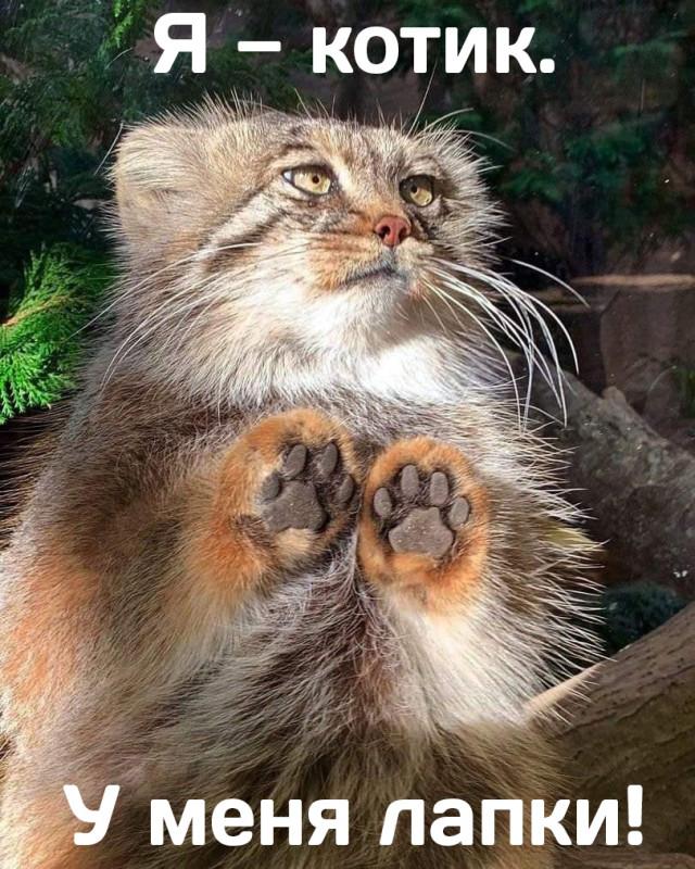 Я котик У меня лапки.jpg