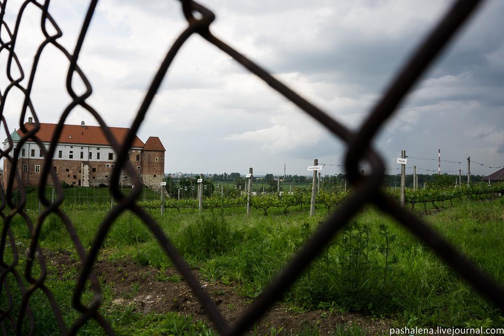 Виноградники Польши