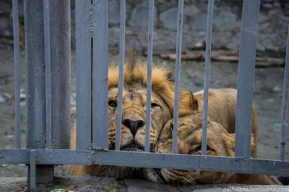 Отрада Армении: Ереванский зоопарк