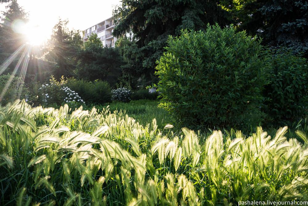 Зелень в Кошице