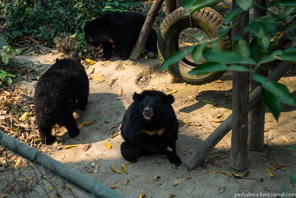 центр спасения медведей