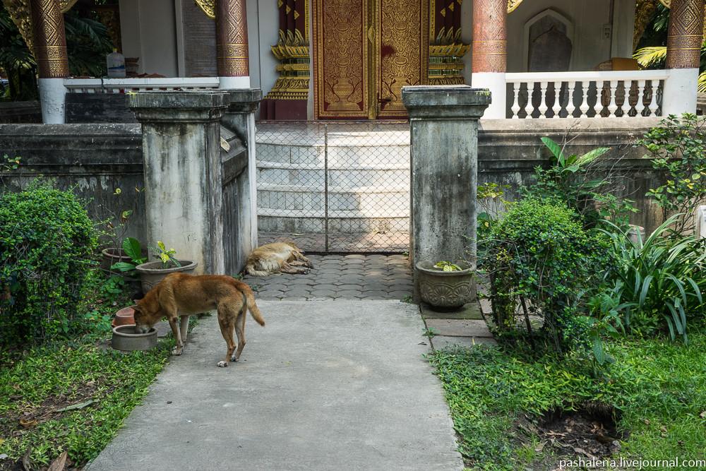 Собаки в Юго-Восточной Азии