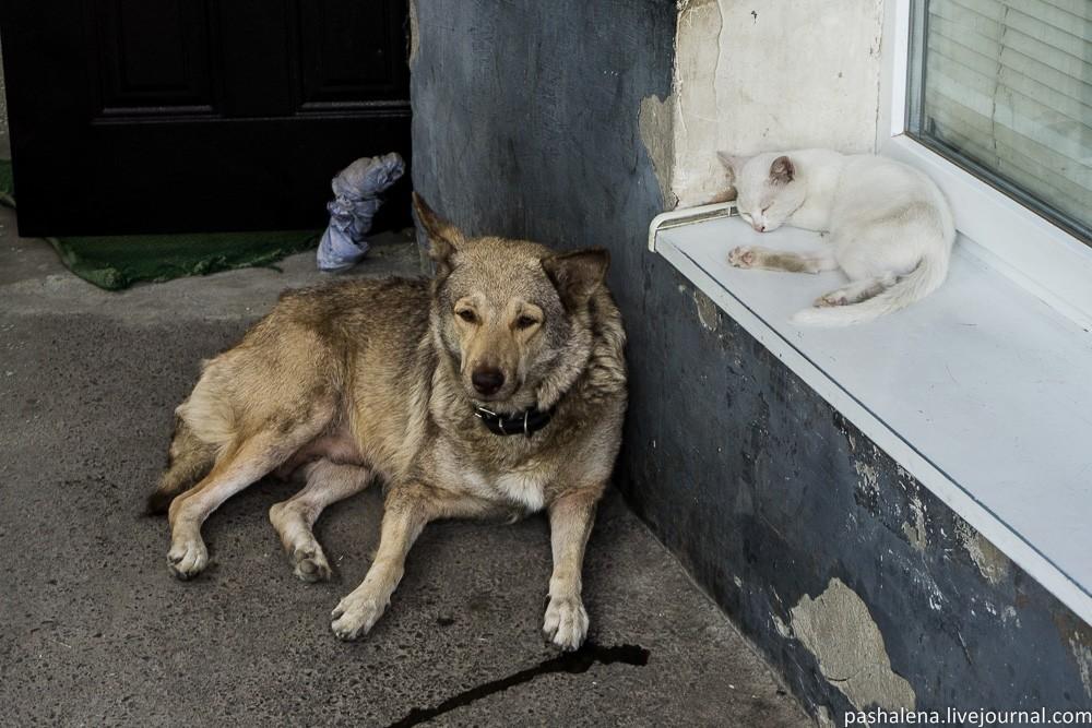 Животные Таганрога