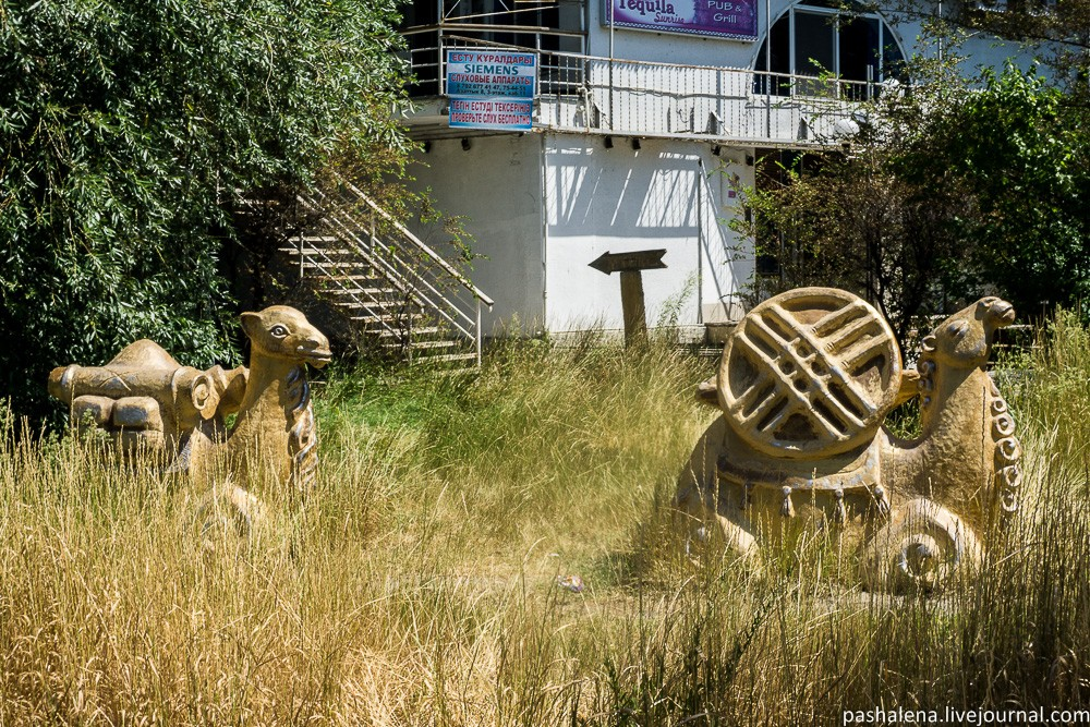 Верблюды Казахстан