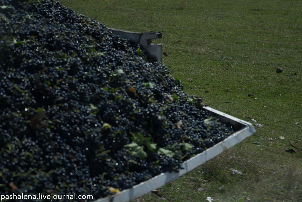 Виноград Грузия