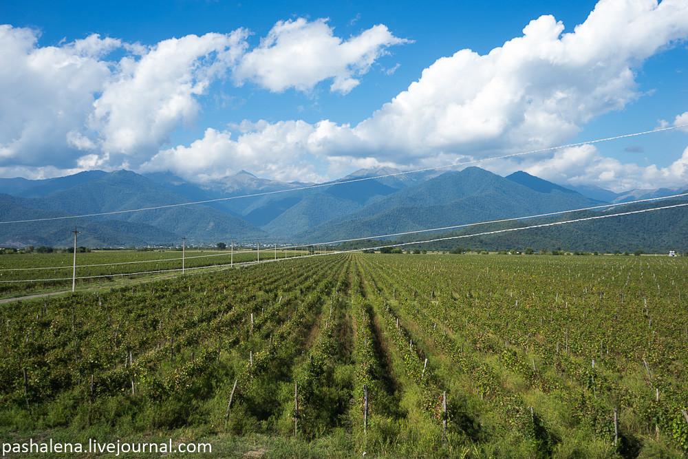 Виноградники Кахетия