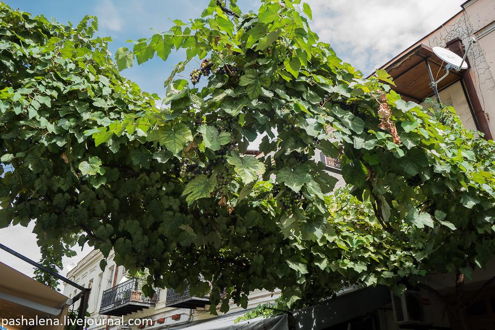 Грозди винограда в Тбилиси