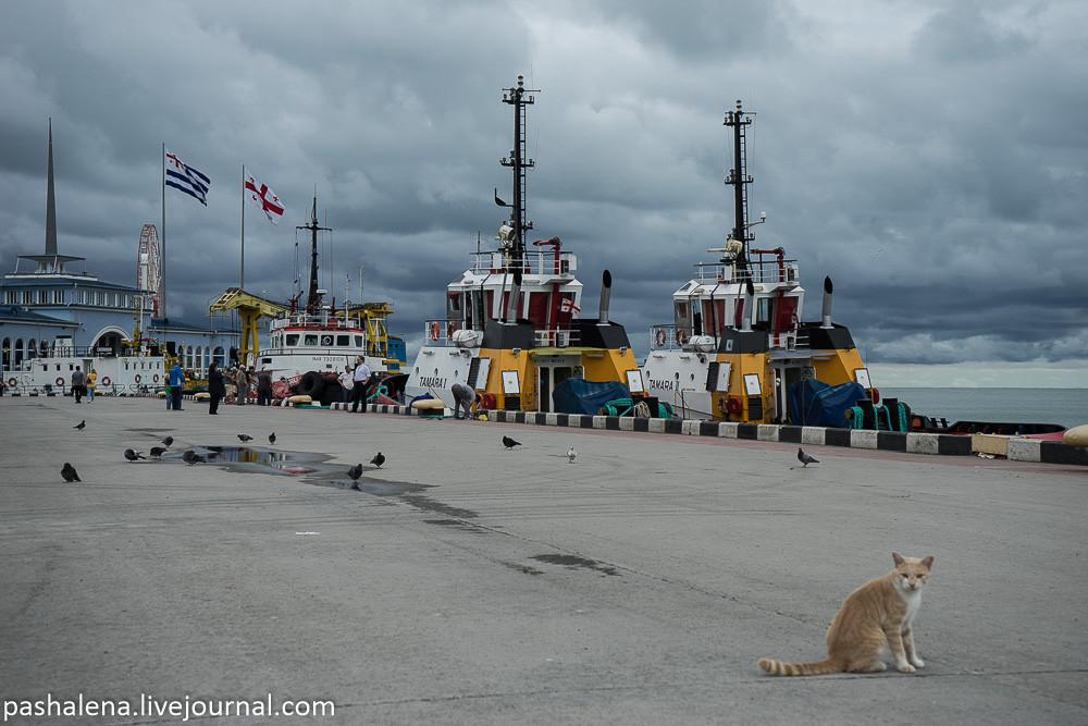 Кот в порту