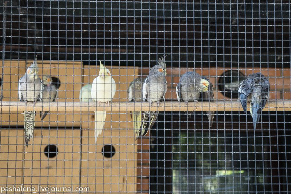 Попугаи Батуми