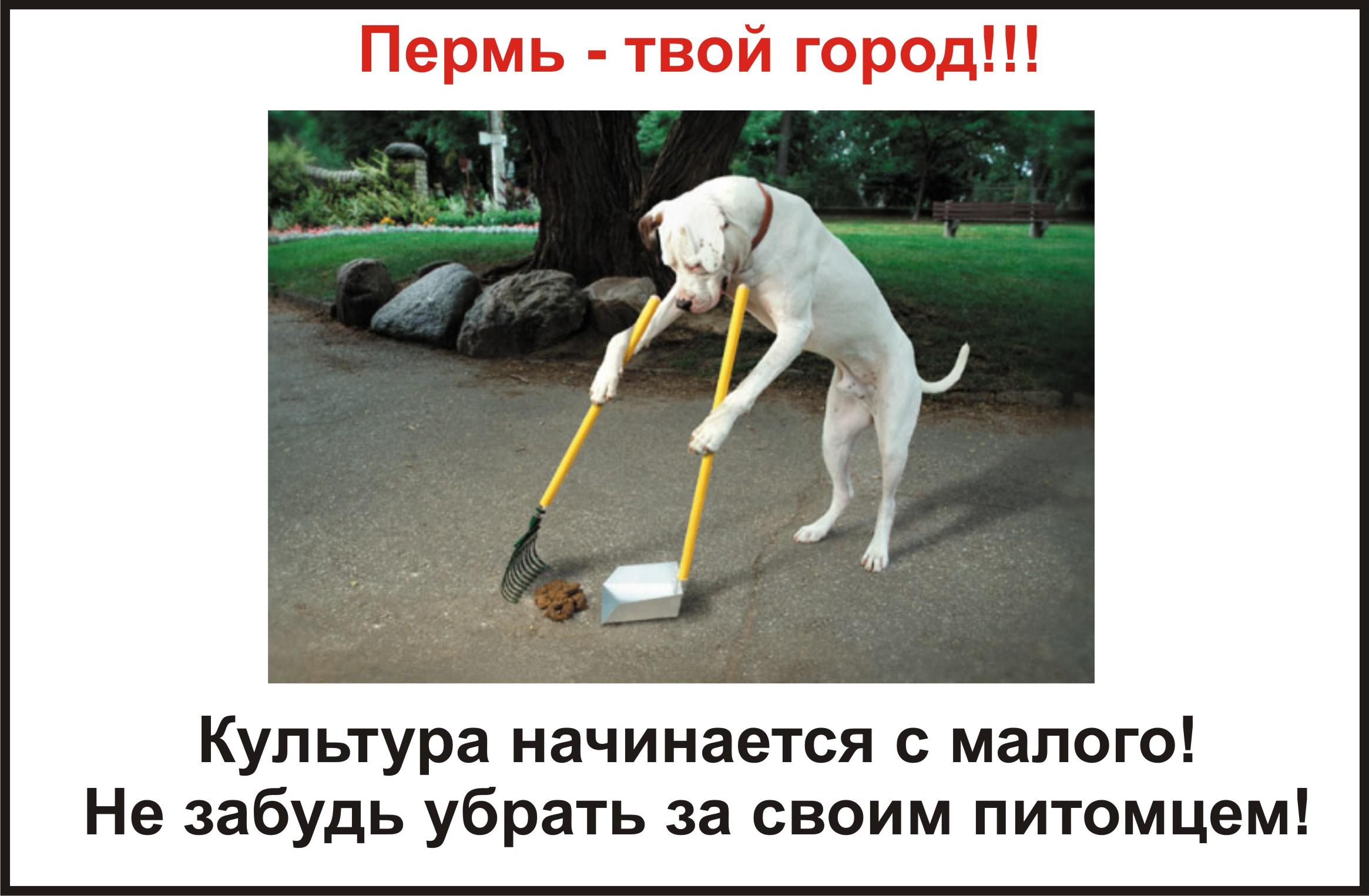 культурные собаки