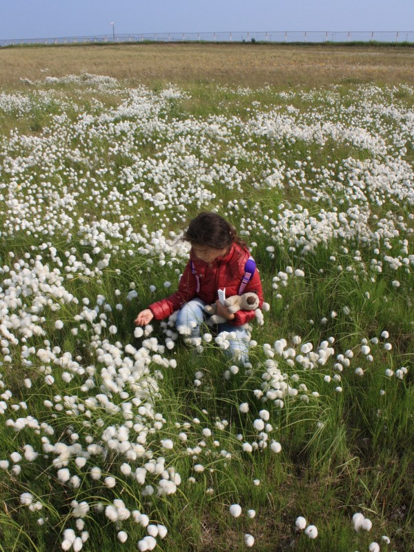 Пролетая над тундрой: вертолётное путешествие в Яр-Сале (18.07.2019) YS66.JPG