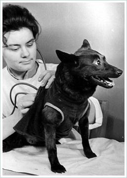 Вперёд! В космос! Советские собаки самые собаки в мире!