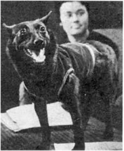 Собака Чернушка, вернувшаяся из космоса на 4-м корабле спутнике.