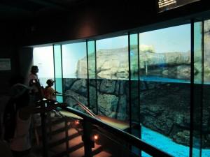 Hakkejima Sea Paradise 2012 Summer School Trip 089