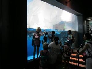 Hakkejima Sea Paradise 2012 Summer School Trip 098