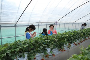 Strawberry picking field trip 2014 HUGE Canon 1944