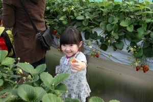 Strawberry picking field trip 2014 HUGE Canon 2003