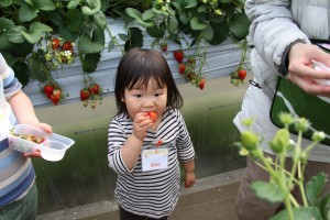 Strawberry picking field trip 2014 HUGE Canon 2005